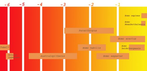 مراحل تطور الصنف البشري بملايين السنين