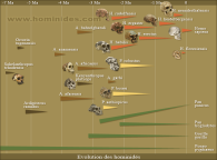 التطور التاريخي لصنف البشر
